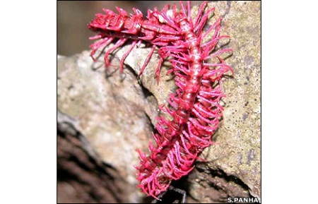 _45299047_millipede466panha_cr2
