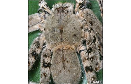 _45299048_spider466jager_cr21